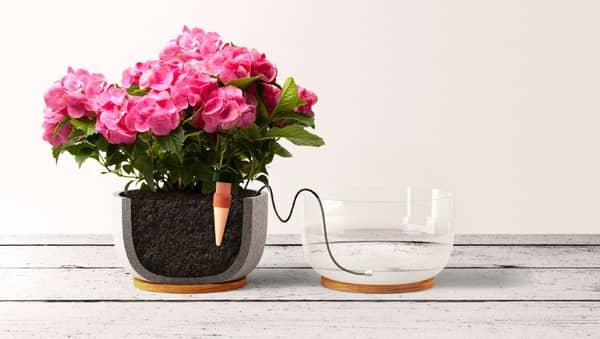 arrosage pour plantes en pot