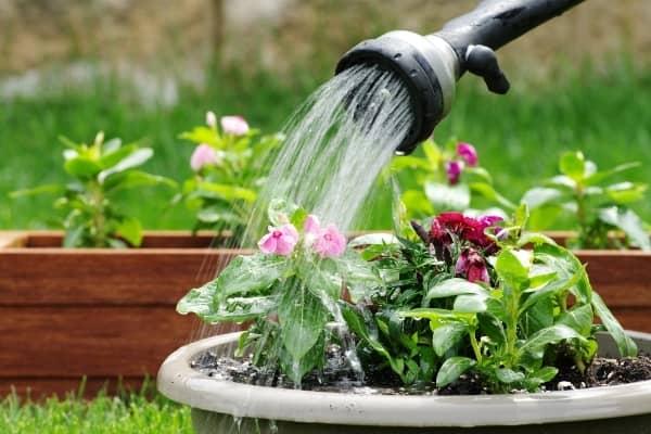 arroser plantes avec du sel d epsom auxine jardinerie alternative colmar