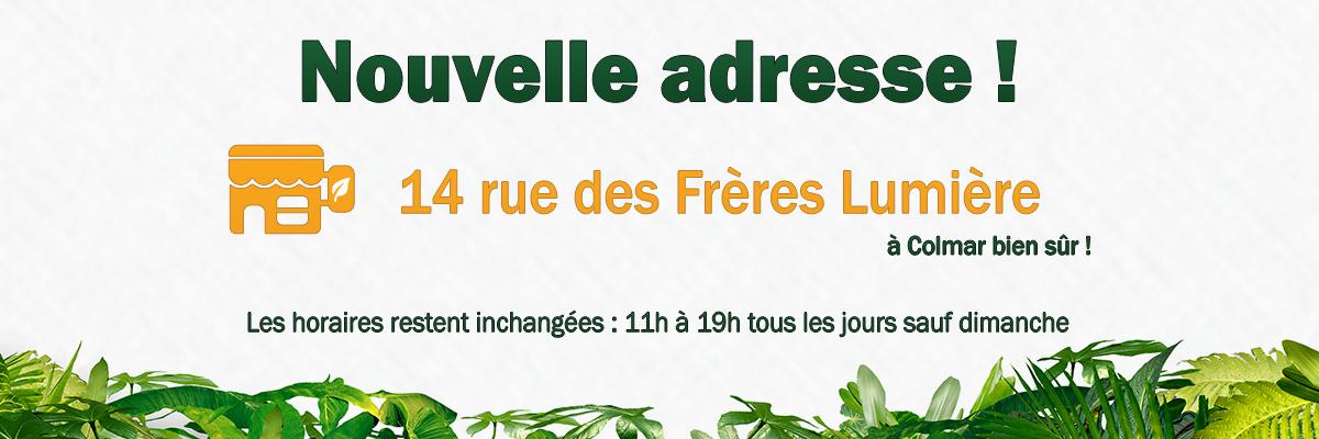 auxine-growshop-colmar-alsace-nouvelle-adresse