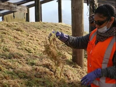 besgrow spagmoss premier sphaigne qualite durable auxine jardinerie alternative colmar