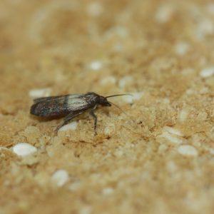 biotop lutter contre mites alimentaires trichogramme 4 diffuseurs 4 semaines de traitement cuisine