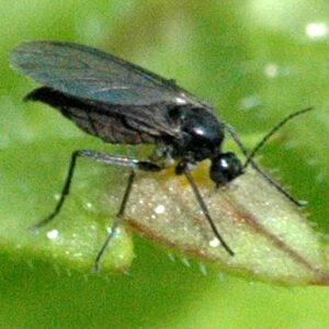 biotop lutter contre mouches terreaux nematodes steinernema feltiae 5 millions 10 metres carres plantes ornementales traitement sol