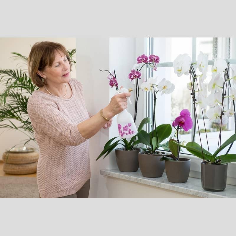 birchmeier suisse melua orchidees pulverisation auxine jardinerie alternative colmar