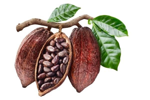 cabosse de cacao paillage paillis