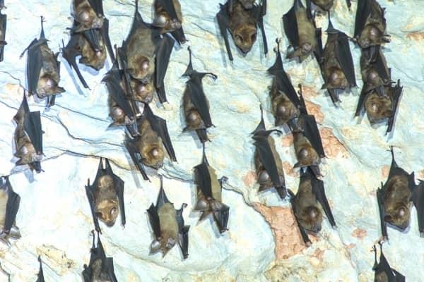 chauve souris dans une grotte