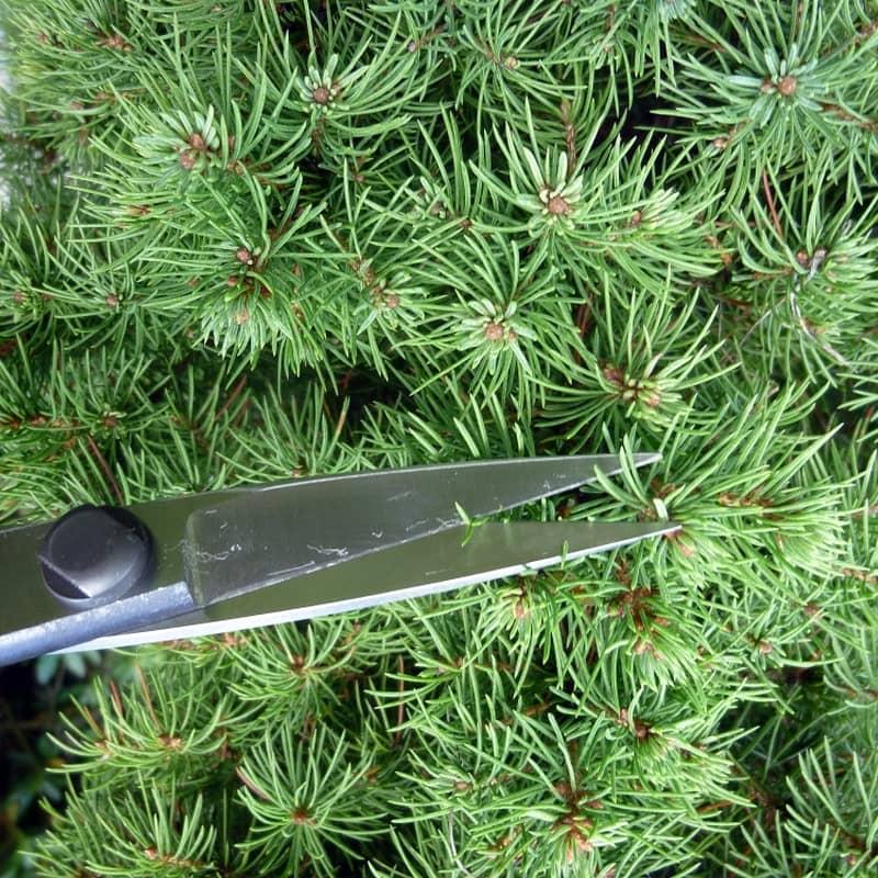 ciseaux a bonsai okatsune taille des bonsais