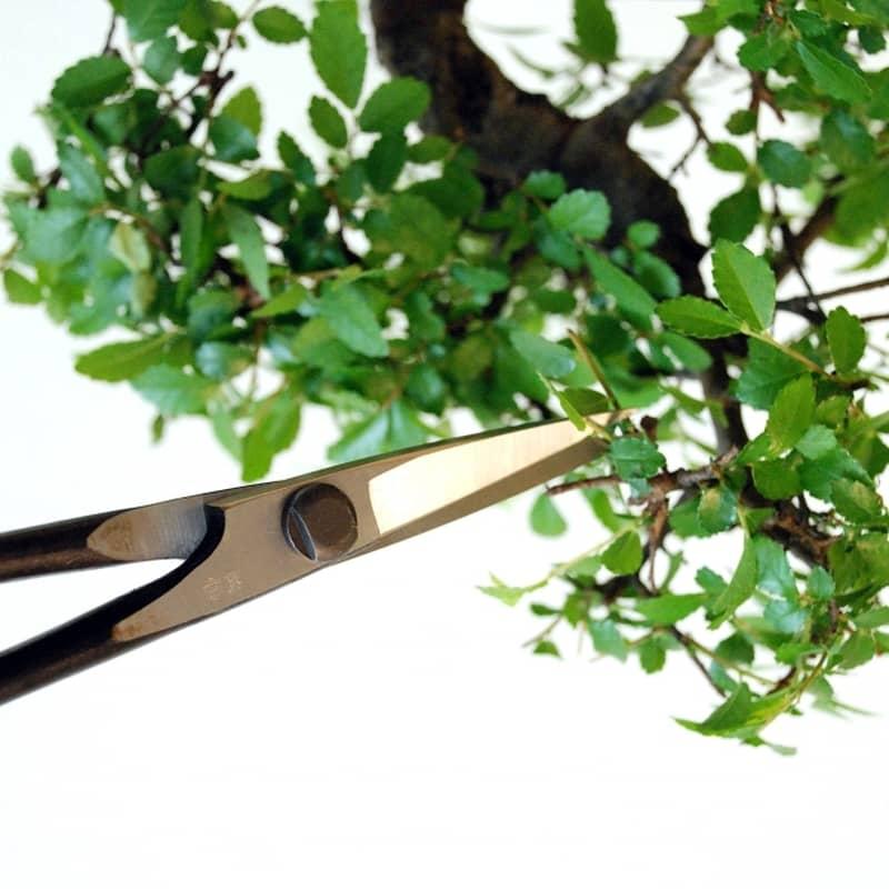 ciseaux pour bonsai okatsune taille