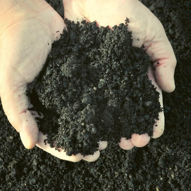 compost de fumier de vache biofertil