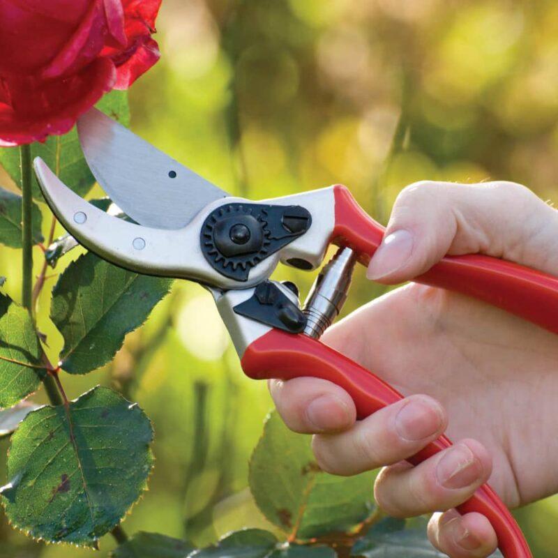 depypere secateur taille rosier branche auxine jardinerie alternative colmar