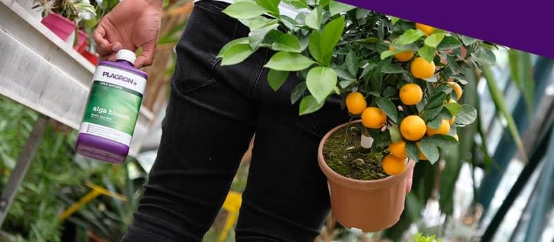 engrais organique plagron indoor culture auxine jardinerie alternative colmar