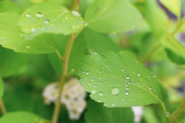 evapotranspiration culture interieur indoor climat auxine jardinerie alternative colmar