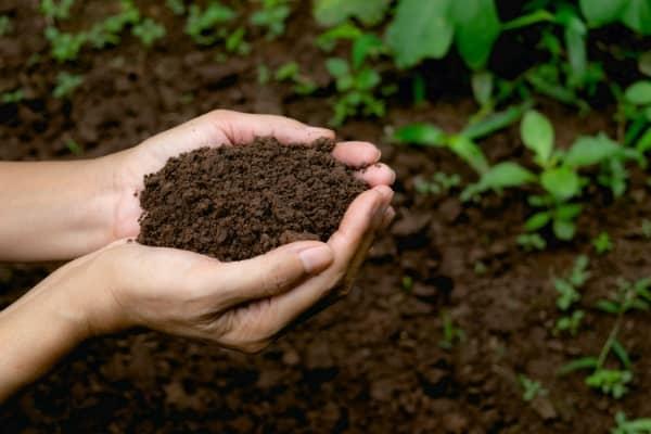 fertilisation organique auxine jardinerie alternative colmar