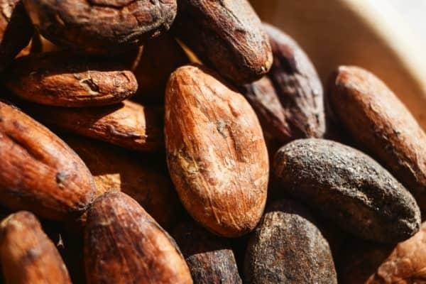 feve cacao jardin