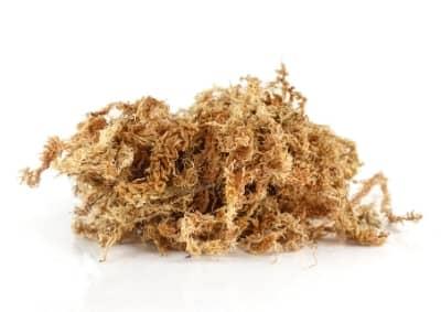 fibres de sphaigne substrat auxine jardinerie alternative colmar