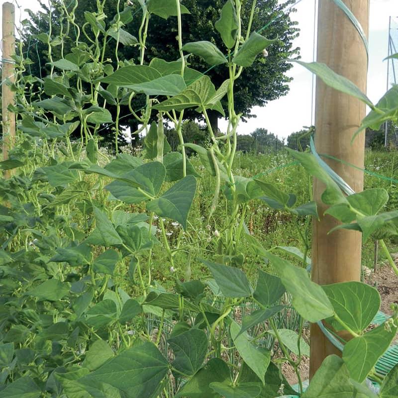 filet a ramer pour legumes et plantes grimpantes