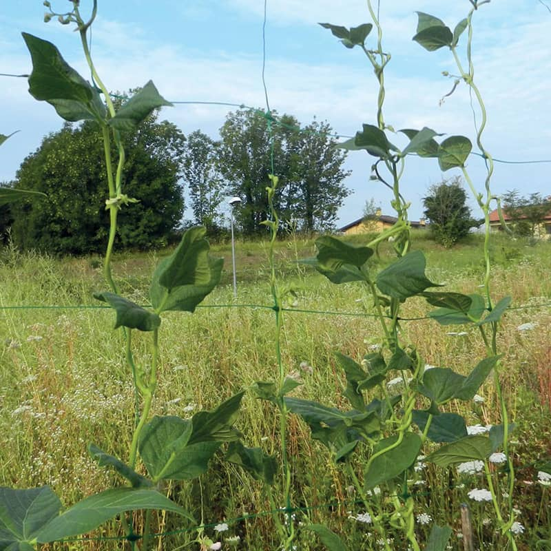 filet a ramer tenax flora