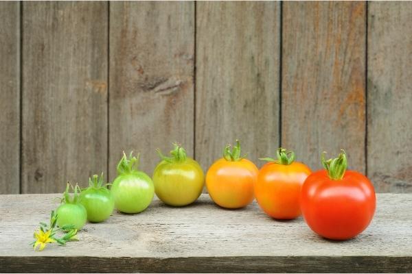 floraison et maturation des fruits