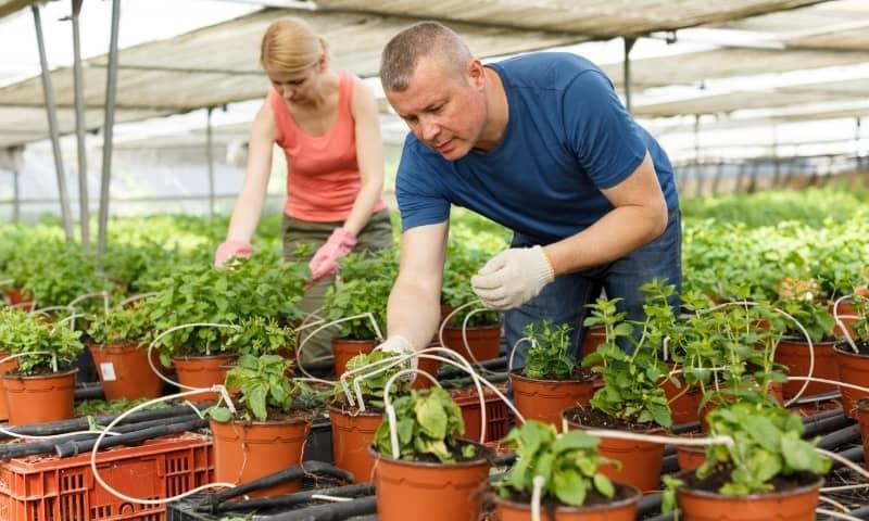 fraise hydroponie hors sol biologique auxine jardinerie alternative colmar