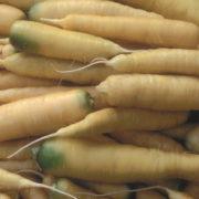 Graine Kokopelli - Carottes - Blanche de Küttingen - Daucus carota - P0603 - Sachet de 4 grammes