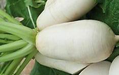 Graine Kokopelli - Navets - Des Vertus Marteau - Brassica rapa - P5420 - Sachet de 500 graines
