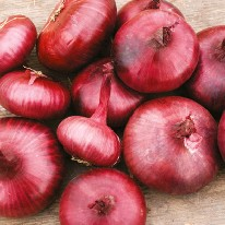 Graine Kokopelli - Oignons - Rouge de Genève - Allium cepa - L0016 - Sachet de 2 gramme