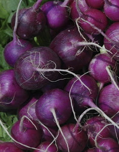 Graine Kokopelli - Radis - Purple Plum - Raphanus sativus - P5623 - Sachet de 4 grammes