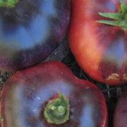 Graine Kokopelli - Tomates indigo de mi-saison - Blue Beauty - P6086 - Sachet de 35 graines