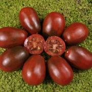 Graine Kokopelli - Tomates noires de mi-saison - Prune Noire - Solanum lycopersicum - P7406 - Sachet de 35 graines