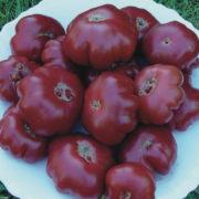 Graine Kokopelli - Tomates noires de mi-saison - Purple Calabash - Solanum lycopersicum - P7103 - Sachet de 35 graines