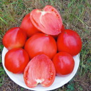 Graine Kokopelli - Tomates roses tardives - Cœur de Bœuf Yasha Yougoslavian - Solanum lycopersicum - P7109 - Sachet de 35 graines