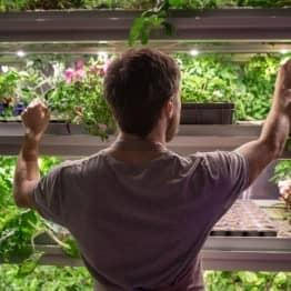 grower culture indoor alsace