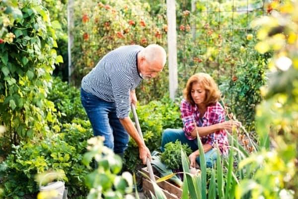jardin potager auxine jardinerie alternative colmar