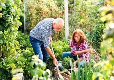 jardin potager biologique permaculture auxine jardinerie alternative colmar