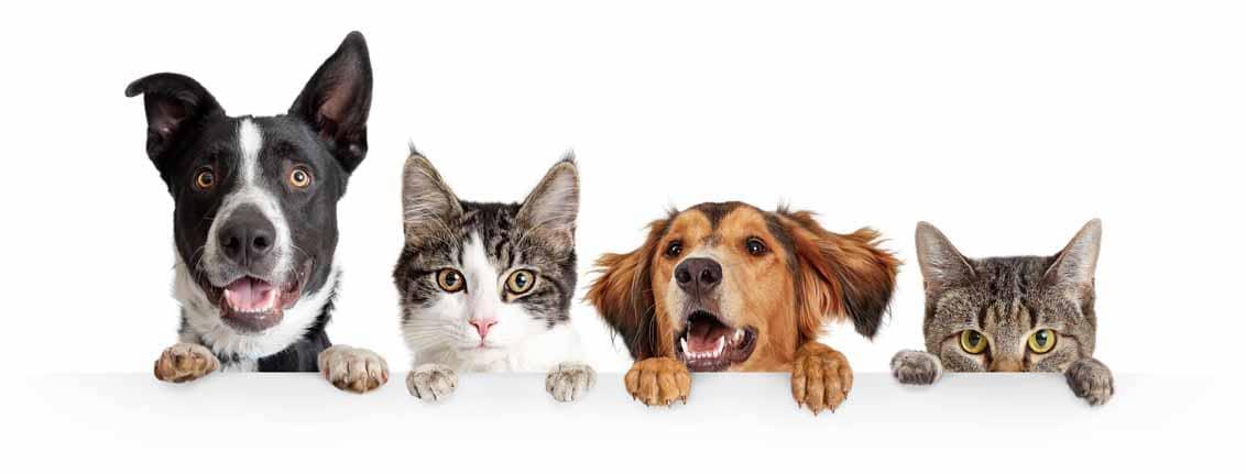 kalina croquettes pour chiens et chats marque francaise