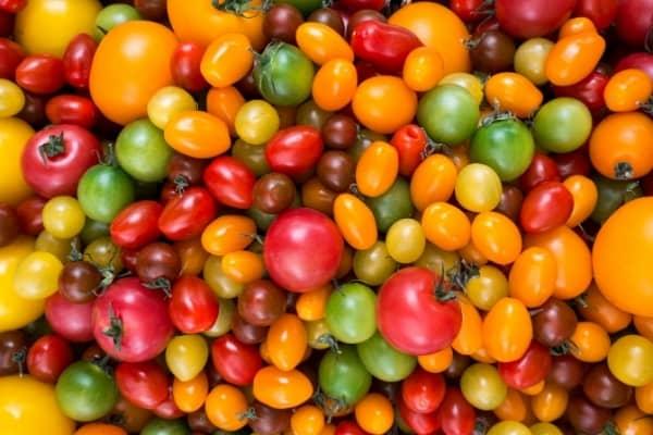 les differentes varietes de tomates