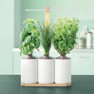 lilo potager interieur pret a pousser auxine jardinerie alternative colmar