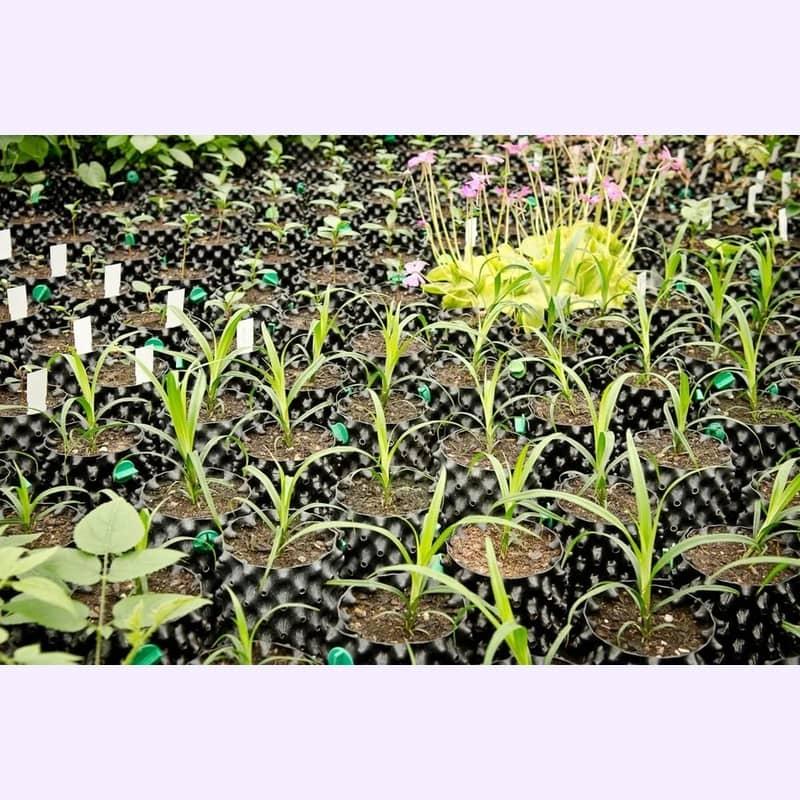nursery auxine jardinerie alternative colmar