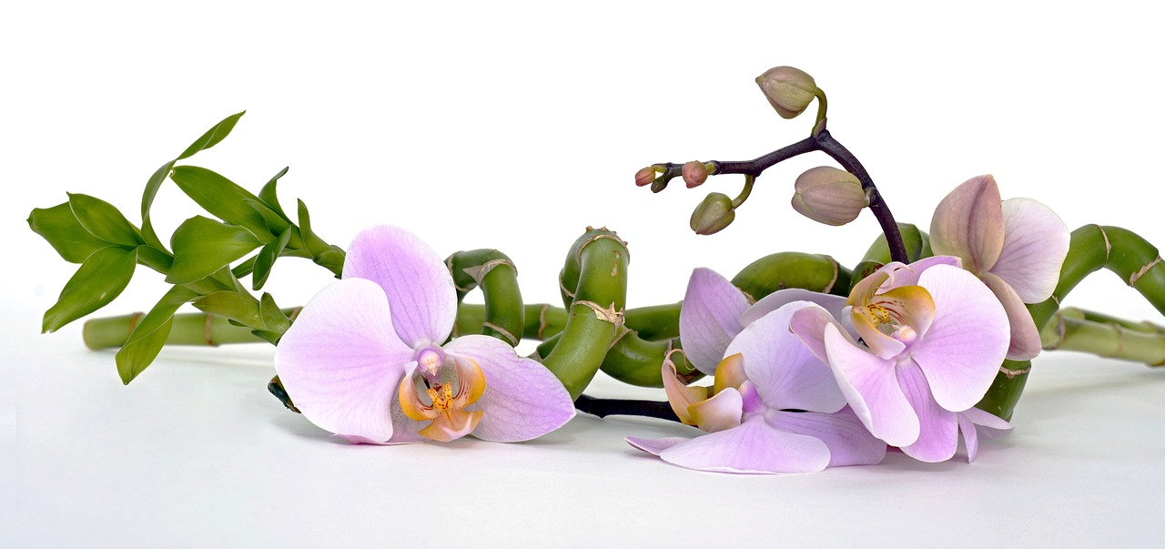 orchid-2115262_1280