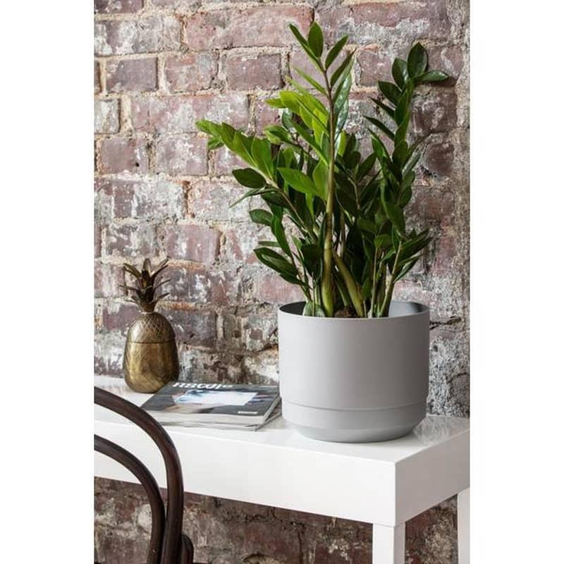 orthex paulina cm plantes d interieur