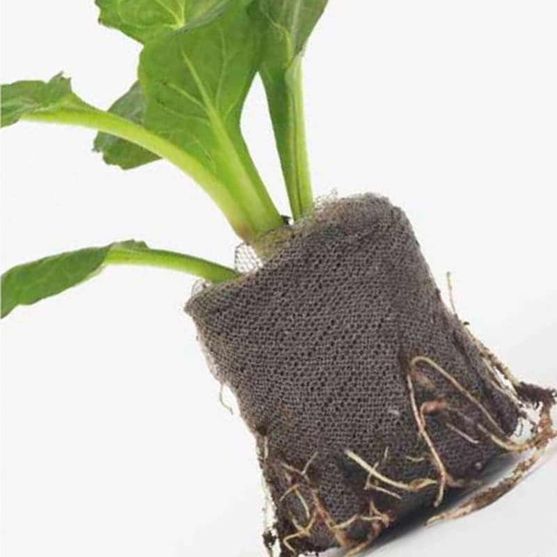 pastille jiffy tourbe bouture semis auxine jardinerie alternative colmar