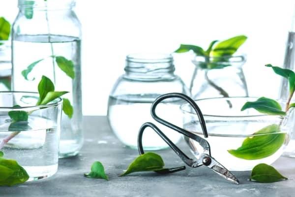 plantes en hydroculture