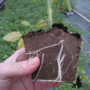 pot carre tourbe jiffy biodegradable 8x8x8 auxine jardinerie alternative colmar