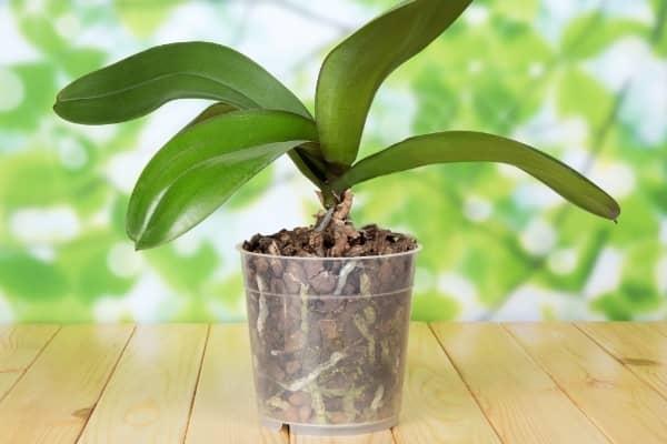 pot en plastique transparent pour orchidee