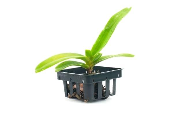 Panier pour orchidee