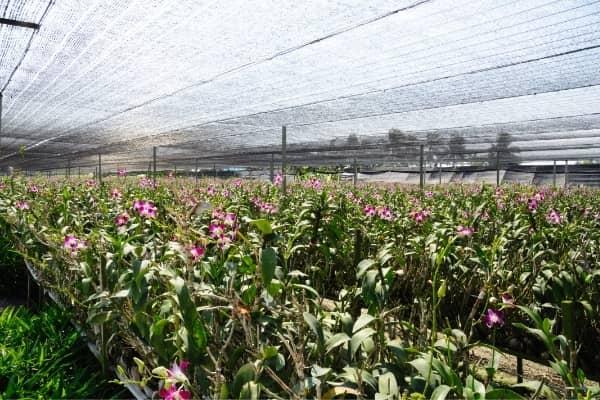 producteur d orchidees utilisant le substrat orchiata