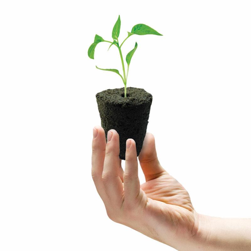 propagation vegetale rootit 50x eponges de bouturage germination 5