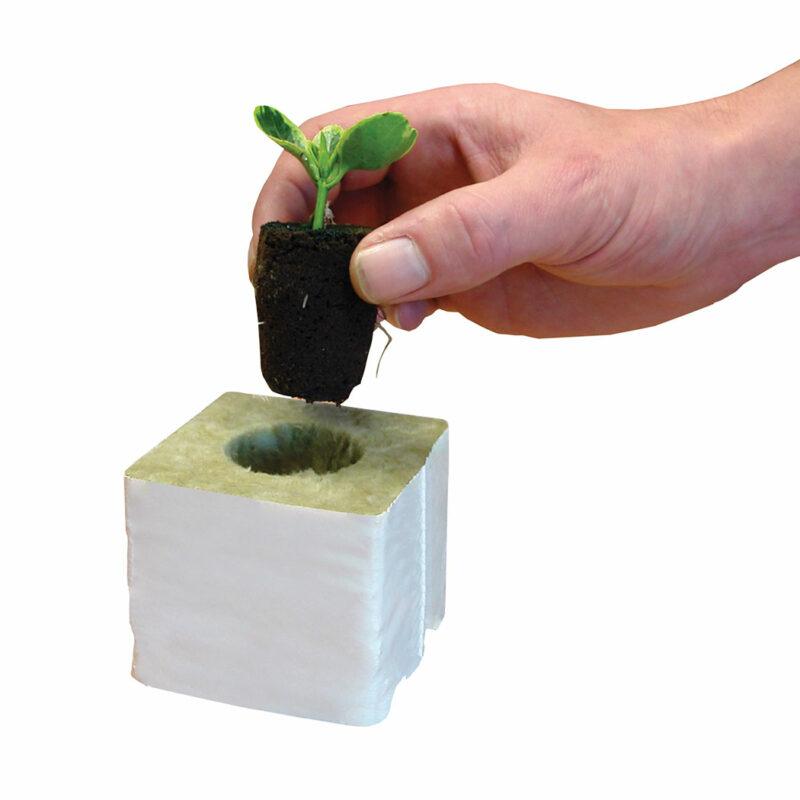 propagation vegetale rootit 50x eponges de bouturage germination 7