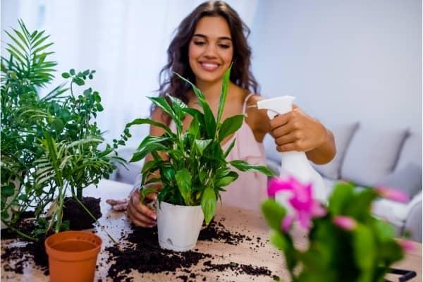 pulverisateur pour plantes
