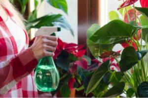 pulverisation des plantes d interieur