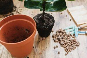 rempoter les plantes d interieur